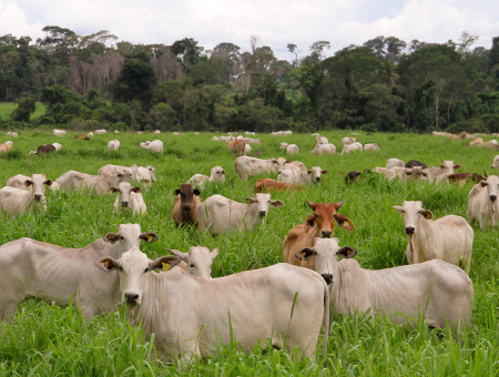 Sustainable intensification implemented by Pecsa reduces 90% of cattle ranching emissions