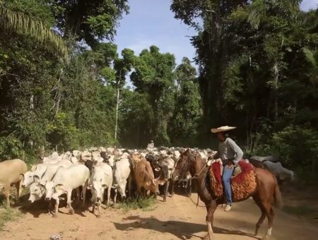 Pecsa is the first cattle ranching B Corp in Latin America